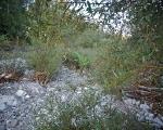 francesco bertelè, the secret garden, innesto di palma nell'isola di tappole, foto a. montresor