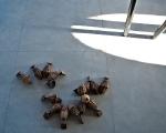 alessandro pavone, innesco, assemblaggio, ferrofusioni, dimensioni variabili, 2011, foto a. montresor