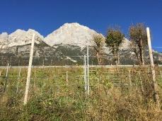 La pacifica vigna di ITRE a Borca, poco sotto la 51 d'Alemagna, con l'Antelao sullo sfondo