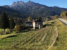 La pacifica vigna di ITRE a Borca, poco sotto la 51 d'Alemagna, verso le Rocchette