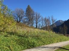 Il piccolo appezzamento vitivinicolo de ITRE a Vodo di Cadore, poco sopra alla ciclabile, delimitato dalla terribile recinzione