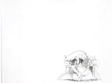 """opening """"La cura dello sguardo""""_frame del vide di patte loper_Museo Paleontologico Rinaldo Zardini di Cortina_foto Elisa Bertaglia"""