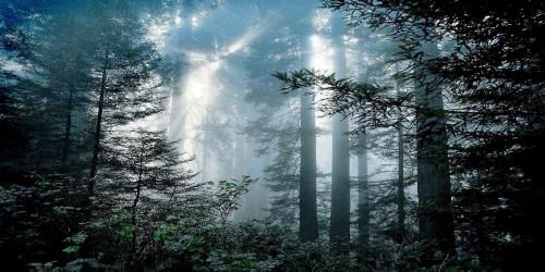 Il mio studio è tra i boschi_12 gennaio 2014