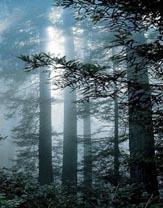 Il mio studio è tra i boschi_thumb