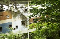 DC_Progettoborca_Villaggio Eni di Borca_Le rampe della Colonia nel bosco ipertrofico di Borca_foto Sergio Casagrande